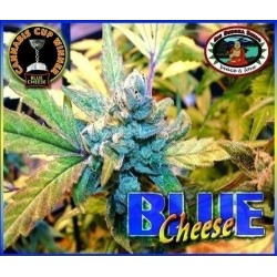 Blue Cheese Feminizowane (Big Buddha Seeds)