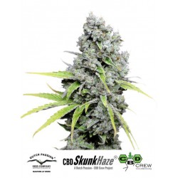 CBD SkunkHaze Feminized (Dutch Passion)
