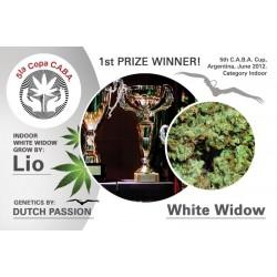 White Widow Feminizowane (Dutch Passion)
