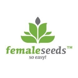 Auto NL Feminized (Female Seeds)