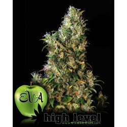High Level Feminized (Eva Seeds)