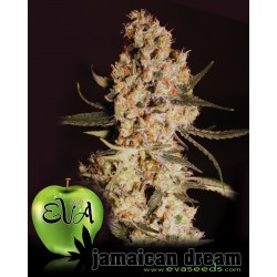 Jamaican Dream Feminized (Eva Seeds)