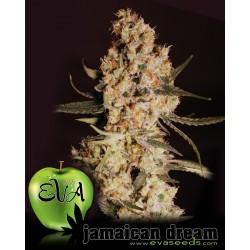 Jamaican Dream Feminized (Eva Seeds)