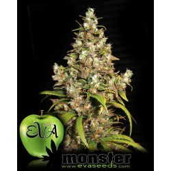 Monster Feminized (Eva Seeds)
