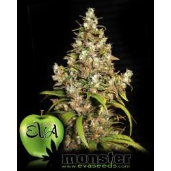 Monster Feminized (Eva Seeds)