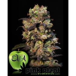 Pink Plant Feminized (Eva Seeds)