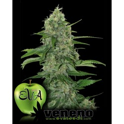 Veneno Feminized (Eva Seeds)