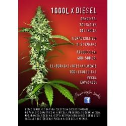1000L X Diesel Feminized (Macaronesia Seeds)