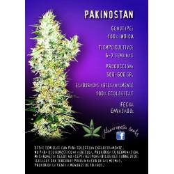 Pakinostan Feminized (Macaronesia Seeds)