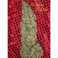 Hubble Bubble Feminized (Mandala Seeds)