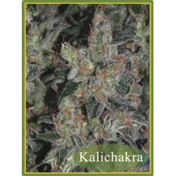 Kalichakra Regular (Mandala Seeds)