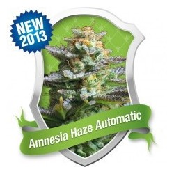 Amnesia Haze Automatic Feminized (Royal...