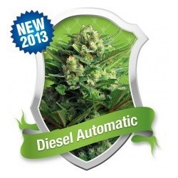 Diesel Automatic Feminizowane (Royal Queen...