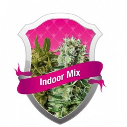 Indoor Mix Feminized (Royal Queen Seeds)