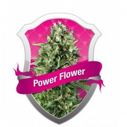 Power Flower Feminized (Royal Queen Seeds)