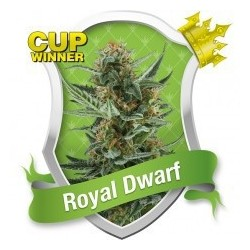 Royal Dwarf Auto Feminized (Royal Queen...