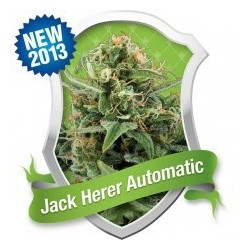 Royal Jack Automatic Feminized (Royal...
