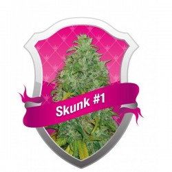 Skunk 1 Feminizowane (Royal Queen Seeds)