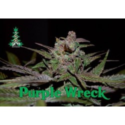 Purple Wreck Feminized (Reserva Privada)