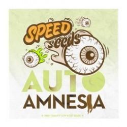 Amnesia Auto Feminizowane (Speed Seeds)