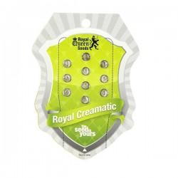 Royal Creamatic Auto Feminizowane (Royal Queen Seeds)