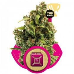 Sour Diesel Feminizowane (Royal Queen Seeds)