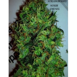 STRAWBERRY SOUR DIESEL FEMINIZED(TheDevilHarvestSeeds)