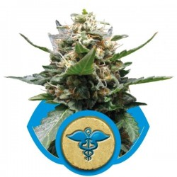 Royal Medic Feminizowane (Royal Queen Seeds)