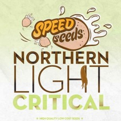 NORTHERN LIGHT X CRITICAL Feminizowane (Speed Seeds)