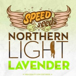 NORTHERN LIGHT X LAVENDER Feminized (Speed Seeds)