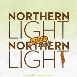 NORTHERN LIGHT X NORTHERN LIGHT  Feminizowane (Speed Seeds)