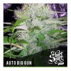 AUTO Big Gun Feminized (Short Stuff Seedbank)