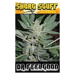 AUTO  Dr. Feelgood Feminizowane  (Short Stuff Seedbank)