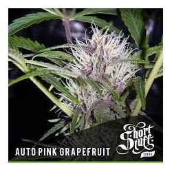 AUTO Pink Grapefruit Feminized (Short Stuff Seedbank)