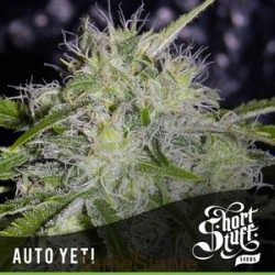 AUTO Yeti Feminized (Short Stuff Seedbank)
