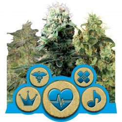CBD Mix Feminized (Royal Queen Seeds)