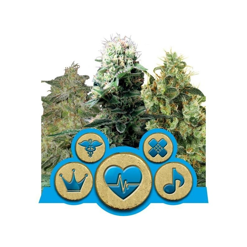 CBD Mix Feminizowane (Royal Queen Seeds)