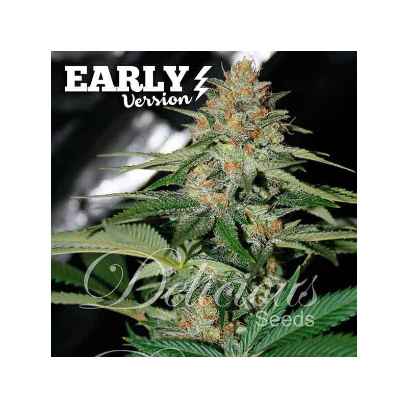 Delicious Candy Fast Version Feminized (Delicious Seeds)