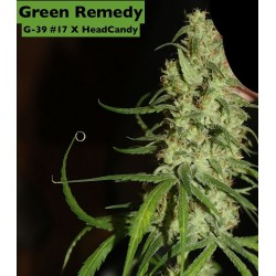 Green Remedy Regularne (Naw Seeds)