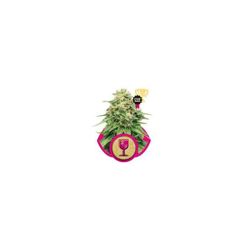 Critical Feminized (Royal Queen Seeds)