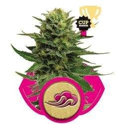 Blue Mystic Feminized (Royal Queen Seeds)