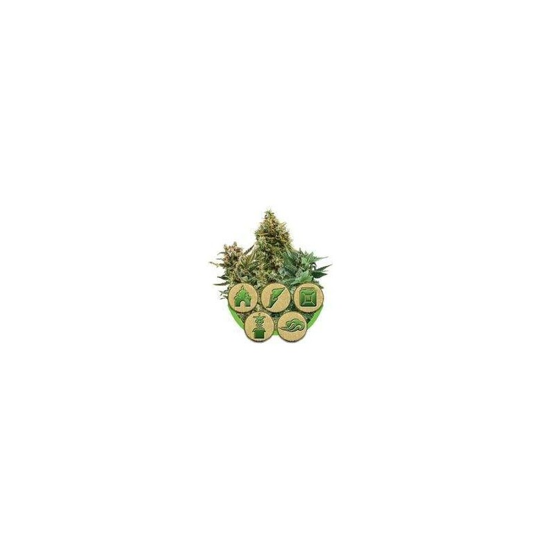 Autoflowering Mix Feminized (Royal Queen Seeds)