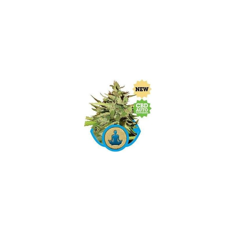 Stress Killer CBD AUTO Feminized (Royal Queen Seeds)
