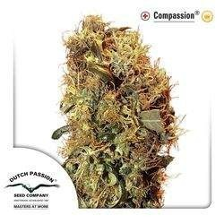 CBD ComPassion Feminizowane (Dutch Passion)