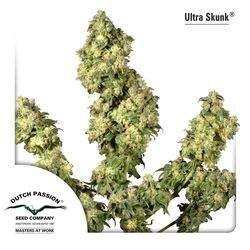 Ultra Skunk Feminizowane (Dutch Passion)