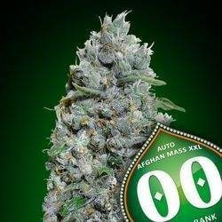 Auto Afghan Mass XXL Feminized (00 Seeds Bank)