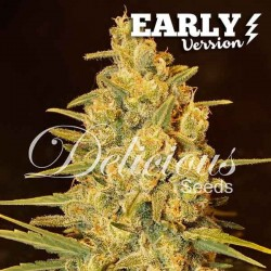 Critical Sensi Star Early Version Feminized  (Delicious Seeds)