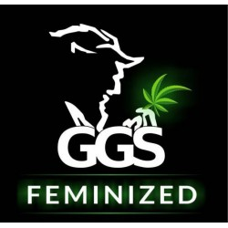 Serious 6 Feminized (GRZECH GROW SEEDS)