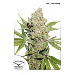 Auto Lemon Zkittle Feminized ( Dutch Passion)