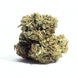 Citric Boom CBD Feminized (Gnomes Seeds)